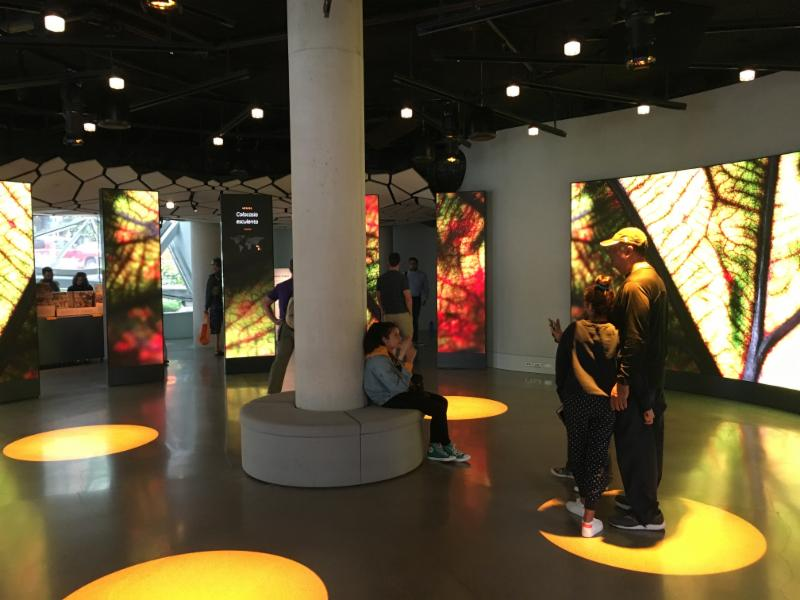 Visitors to the  Understory  exhibit in Seattle (above and below) listen to narratives delivered by ceiling-mounted Audio Spotlight directional speakers
