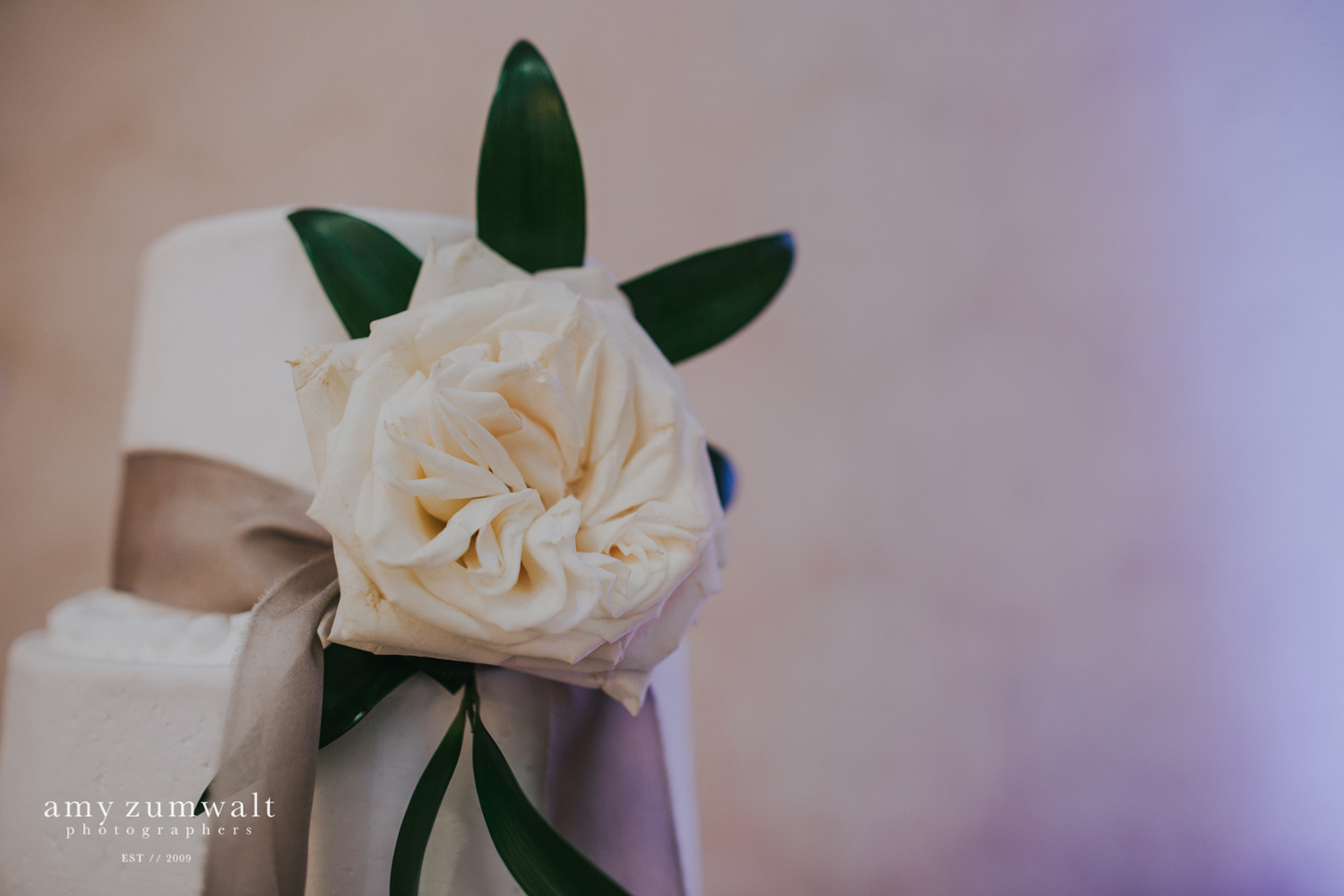 weddng cake with large white garden rose and taupe hanging ribbon
