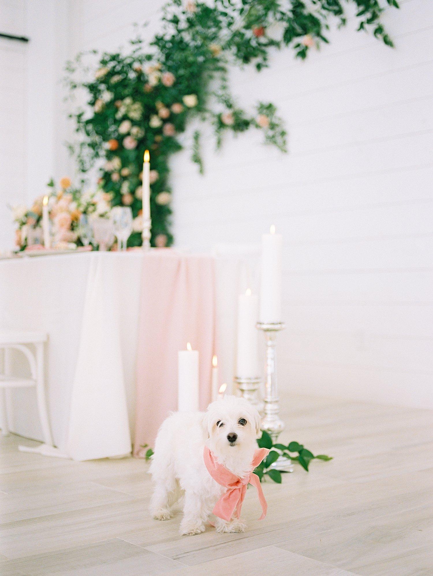 White do ringbearer at blush wedding
