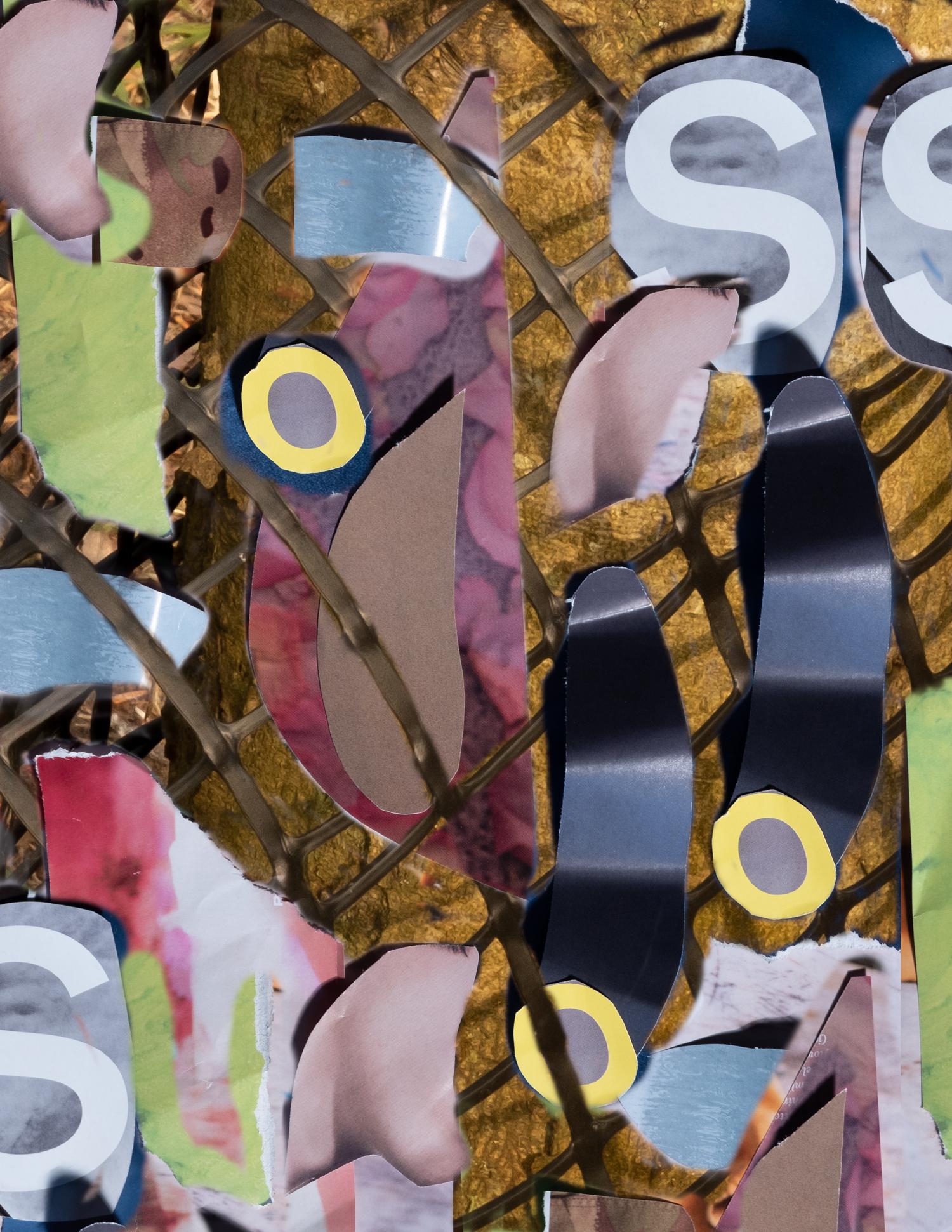 collage_26.jpg