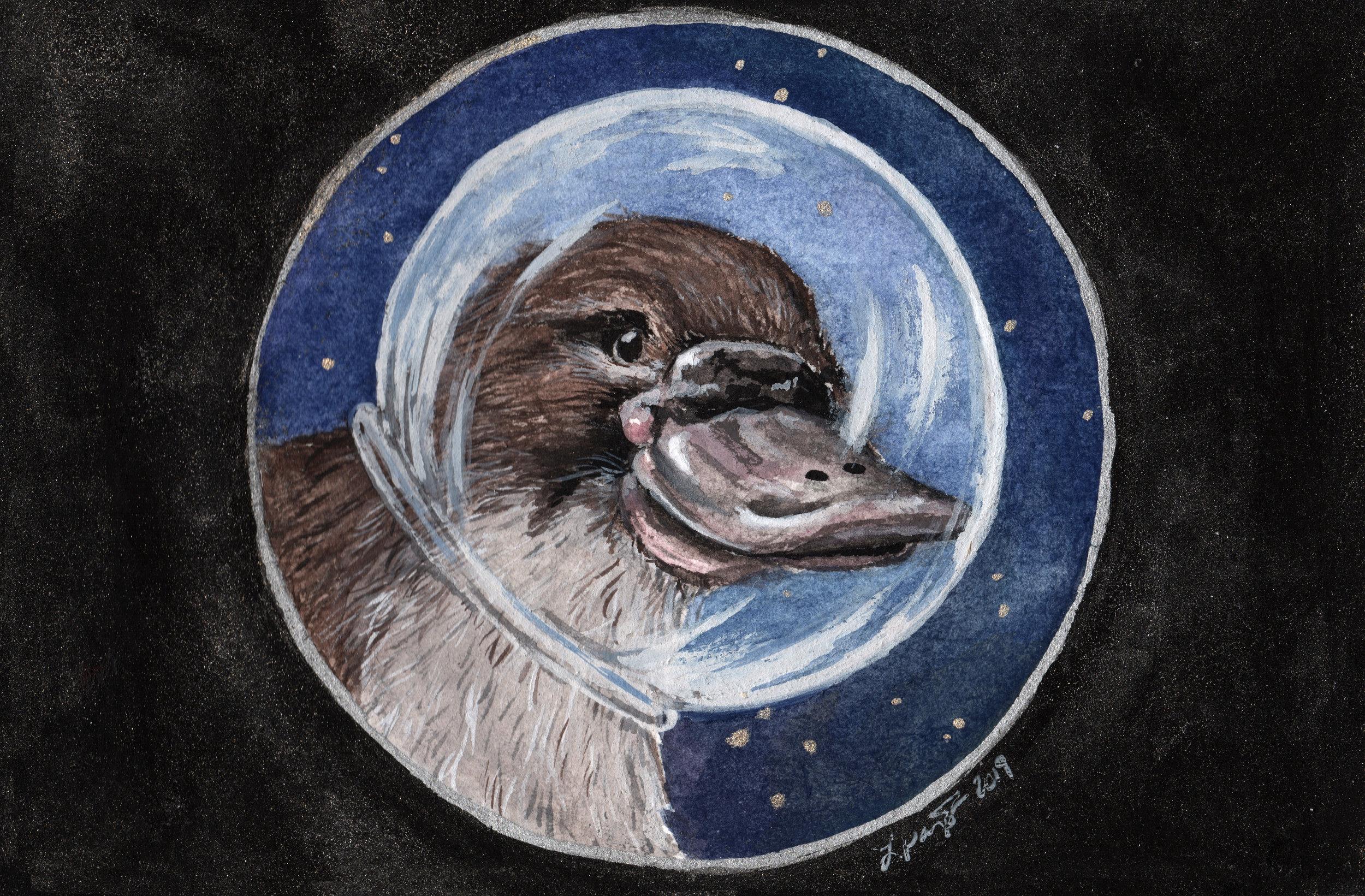 Space Platypus.jpeg