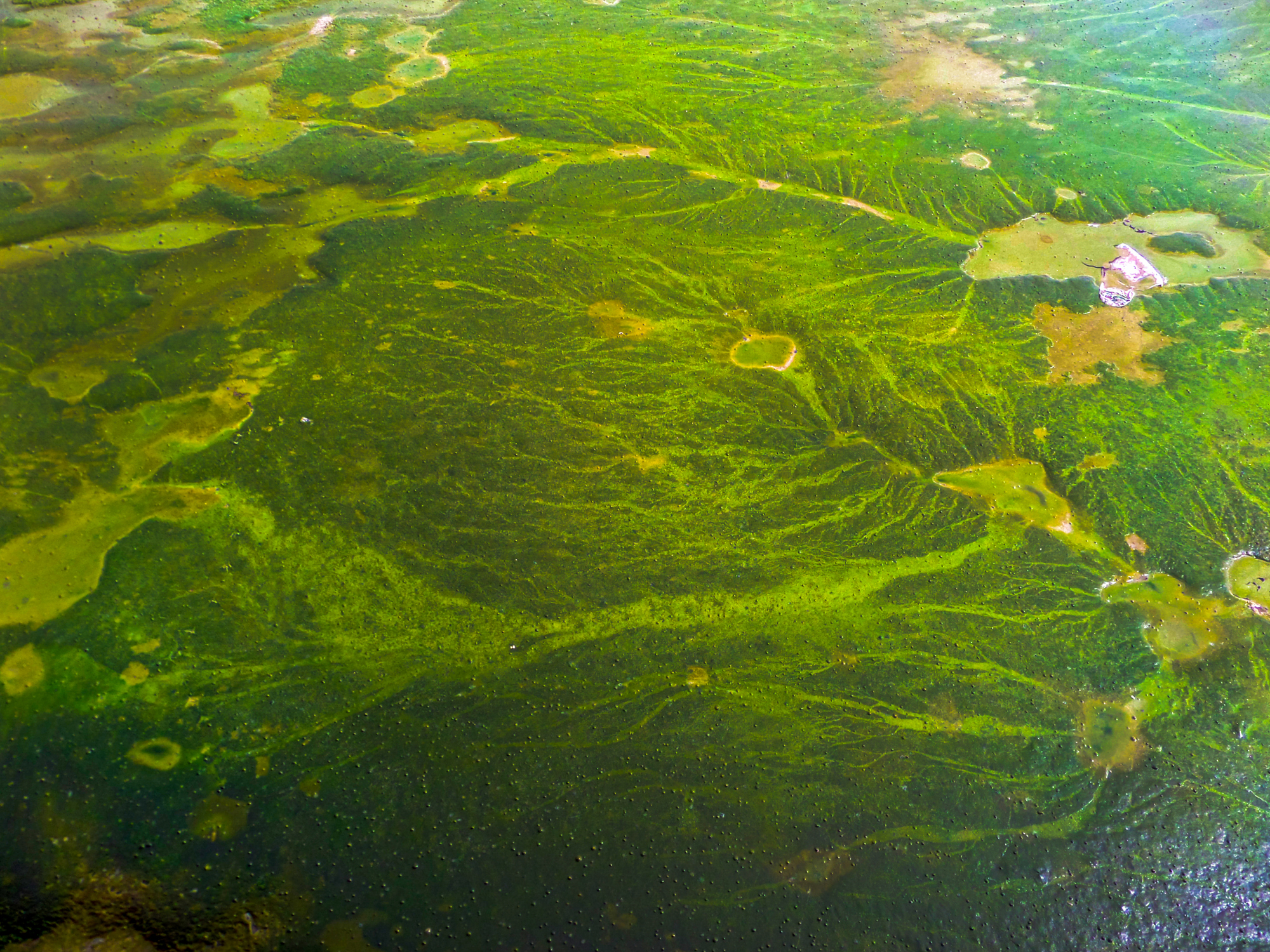 Harmful algal blooms (HABs) affect water quality and endanger human and environmental health