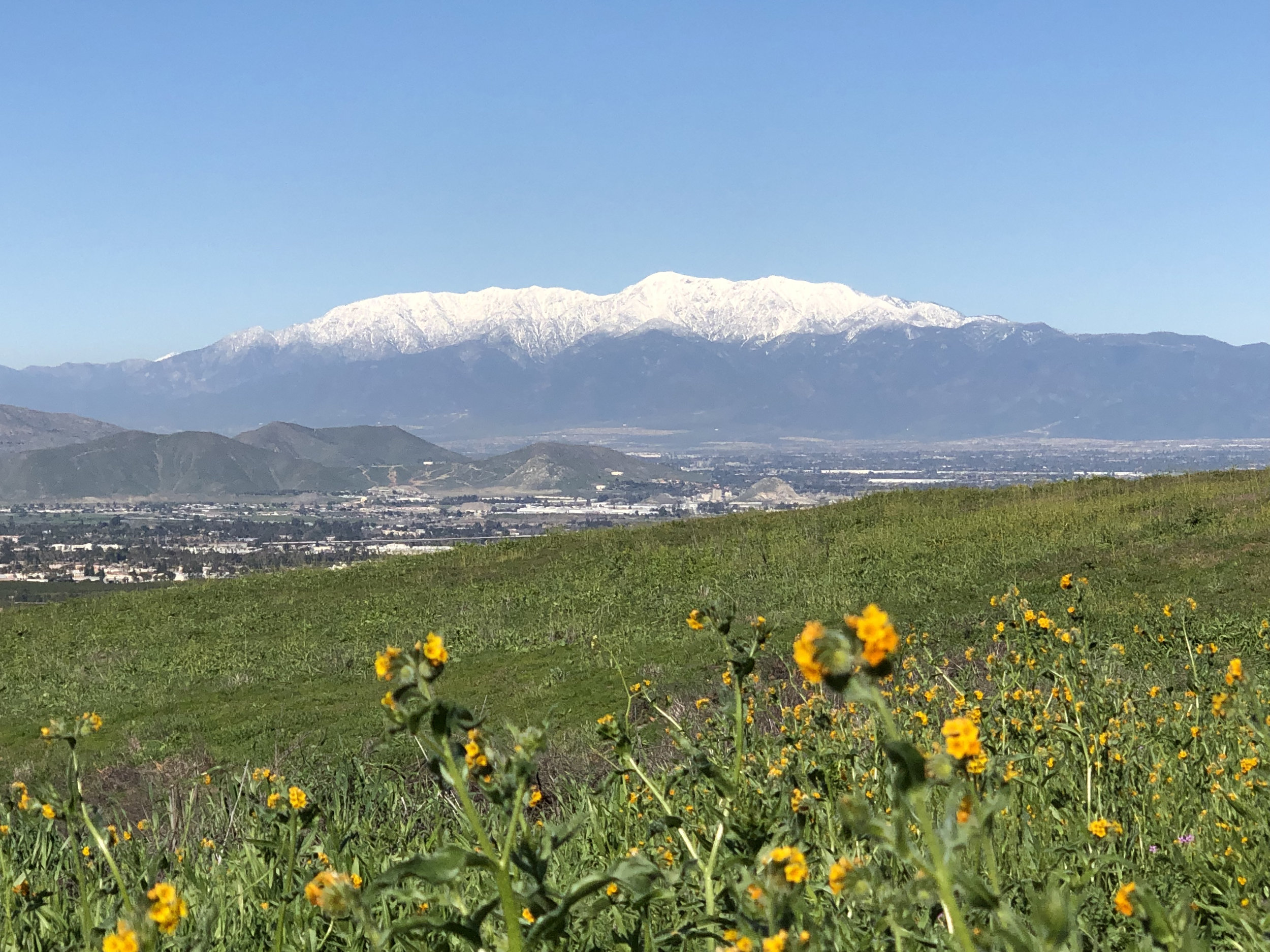 View of a snow-capped Mt. San Antonio from Sycamore Canyon Wilderness Park in Riverside, CA.  Photo credit: Alex Chrystal