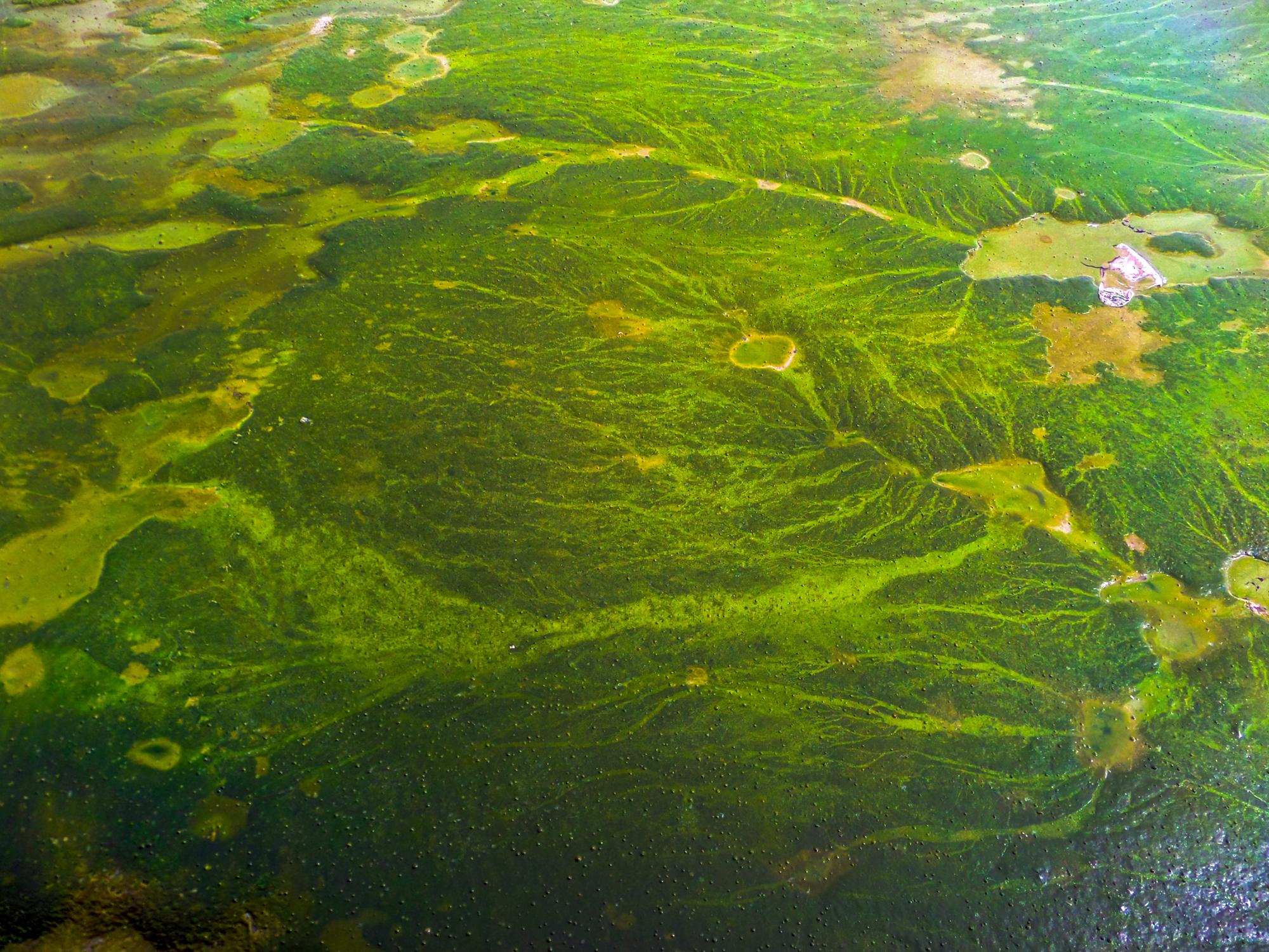 A harmful algal bloom (HAB)