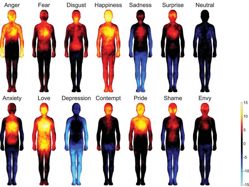 People drew maps of body locations where they feel basic emotions (top row) and more complex ones (bottom row). Hot colors show regions that people say are stimulated during the emotion. Cool colors indicate deactivated areas. (NPR.org)