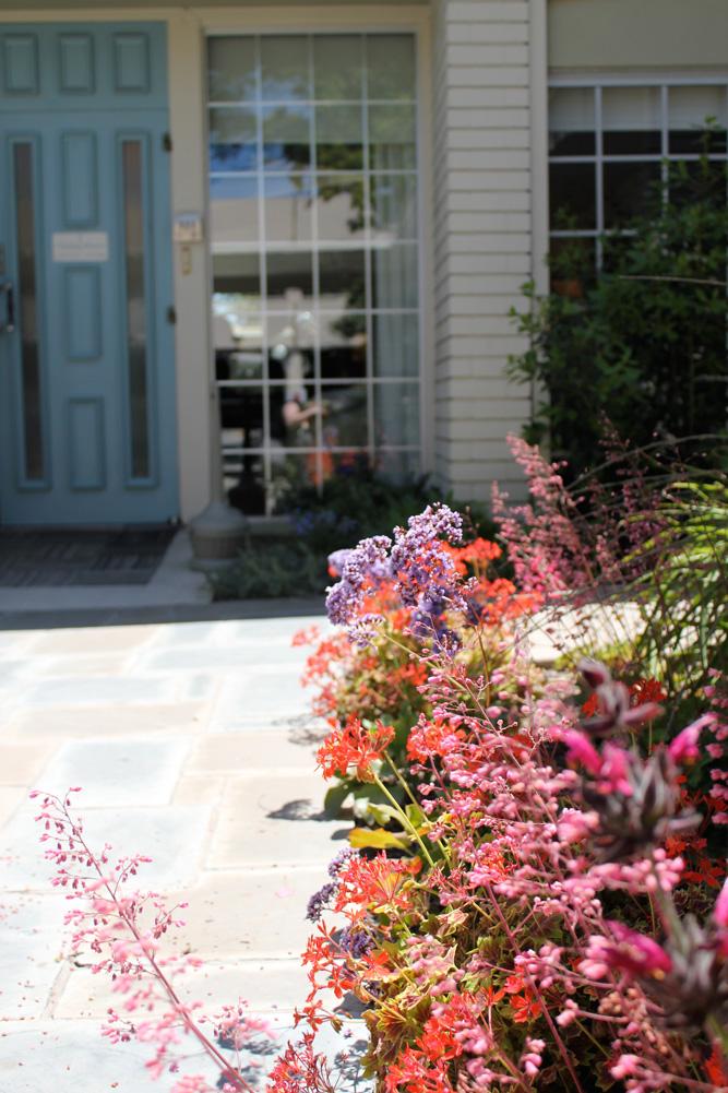 Beautiful California native flowers line the walkway