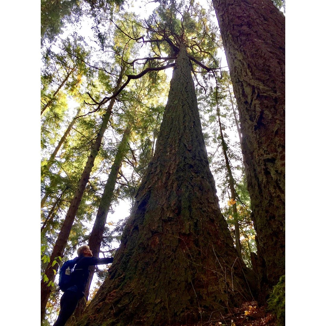 me with big tree, photo credit Laura Brunet