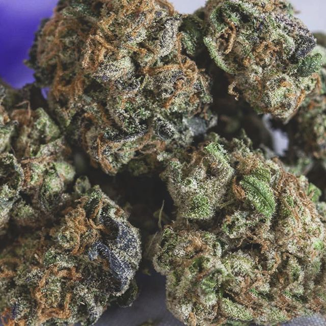 We're celebrating all our favorite strains for #marijuanaweek -- Today's spotlight is shining on one of the most highly soughtafter strains out there today #GirlScoutCookies ⠀ 🍪🍪🍪⠀ If you're suffering from #PTSD or any type of emotional trauma the Girl Scout Cookies strain is probably your best bet for trying to relax. It is sure to take your mind off of the troubling things that make you worry and put you in a relaxed state.⠀ .⠀ .⠀ .⠀ .⠀ #prop215 #mmj #medicalcannabis #norcalcannabis #marin #marincounty #novato #sanrafael #northbay #bayarea #norcal #thc #cannabiscommunity #medical #medicalmarijuana #tiburon #sausalito #organic #cannabis #sfbayarea #415 #weshouldsmoke #norcalweed