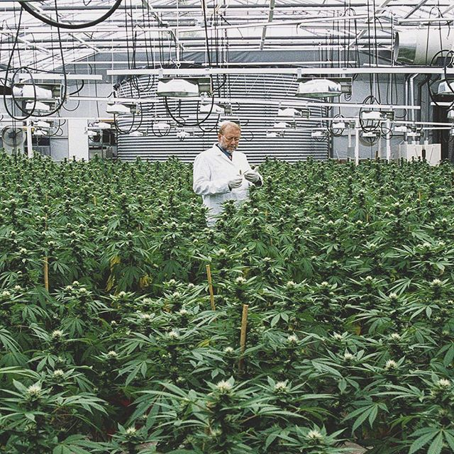 We had the chance to tour a premier indoor grow facility, a thing of beauty if you ask us! ⠀ .⠀⠀ 🌿🌤⛱️🚜⠀⠀ .⠀⠀ .⠀⠀ .⠀⠀ .⠀⠀ .⠀⠀ #weedfarm #potfarm #potfarmers #weedsociety #budfarm #potfarmer #cannabis #mmj #medicalmarijuana #medicalcannabis #cannabiscommunity #thc #bayarea #weshouldsmoke #terps #organic #marijuana #prop215 #northbay #dailycannabis #marincounty #sanrafael #CannabisSociety #cannabisdelivery #mmjpatients