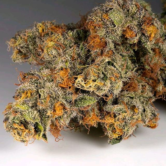 A flavor-packed #hybrid strain #OrangeCookies expresses itself with a strong aroma of sweet citrus⠀ 🍊🍪🍊🍪🍊⠀ The flavors give way to deep #calming body effects that mingle with a euphoric cerebral buzz to leave you #happy and relaxed⠀ .⠀ .⠀ .⠀ .⠀ .⠀ .⠀ .⠀ #sativa #indica #girlscoutcookies #cookies #trichomes #mmj #medicalcannabis #norcalcannabis #marincounty #sanrafael #northbay #norcal #thc #cannabiscommunity #medicalmarijuana #sausalito #organic #cannabis #sfbayarea