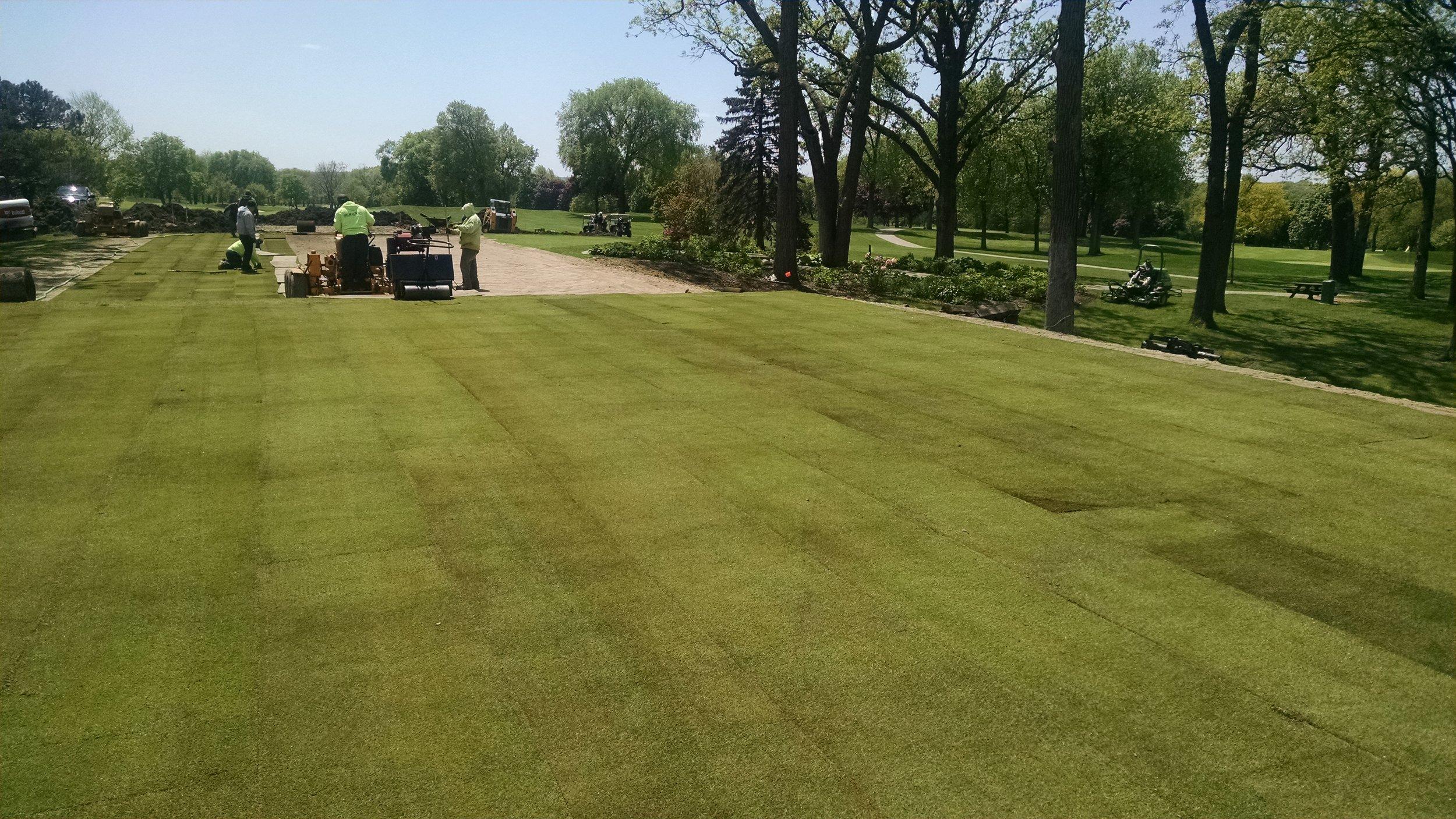 Bentgrass Install After