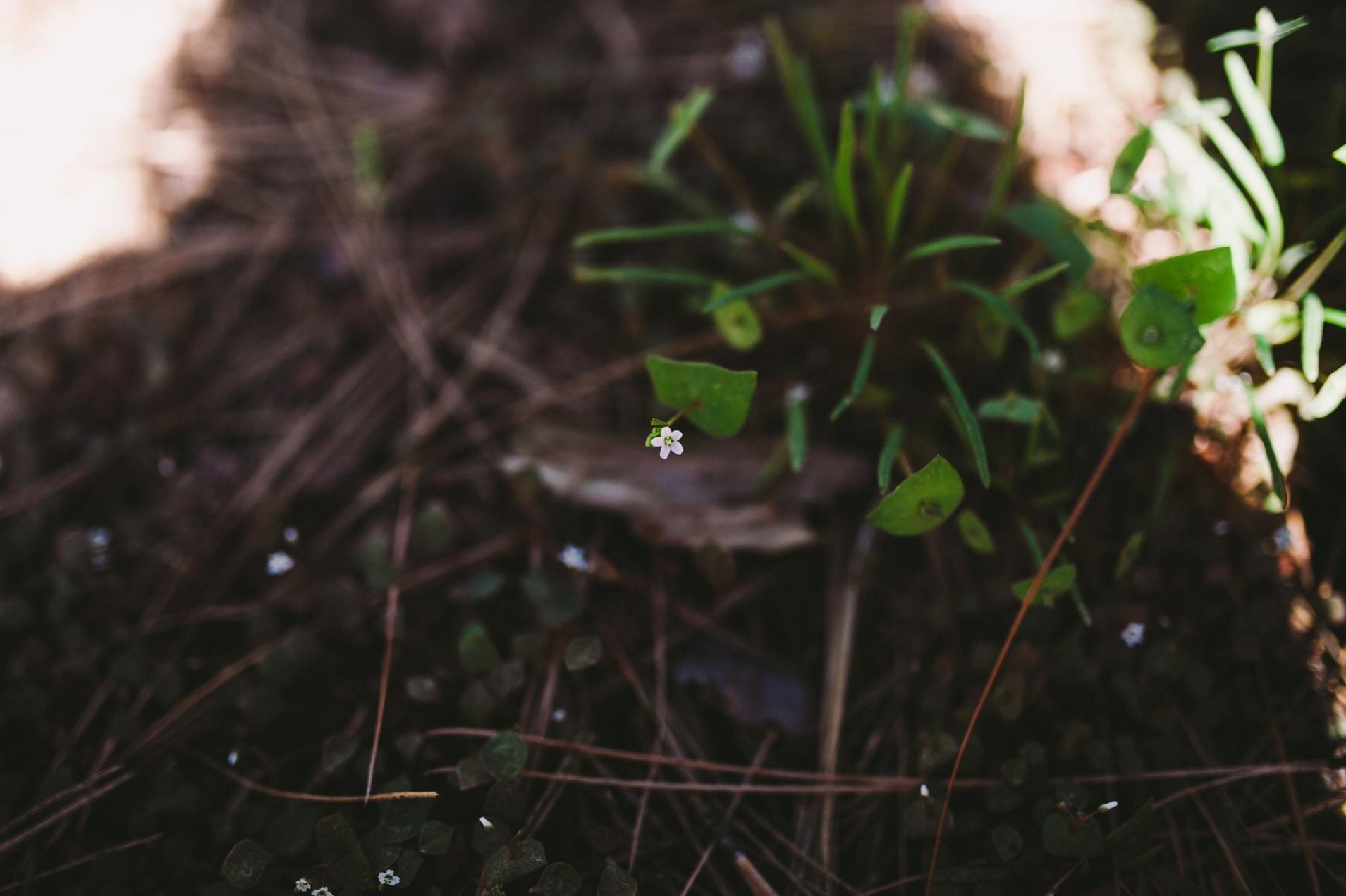 Yosemite Spring Flowers