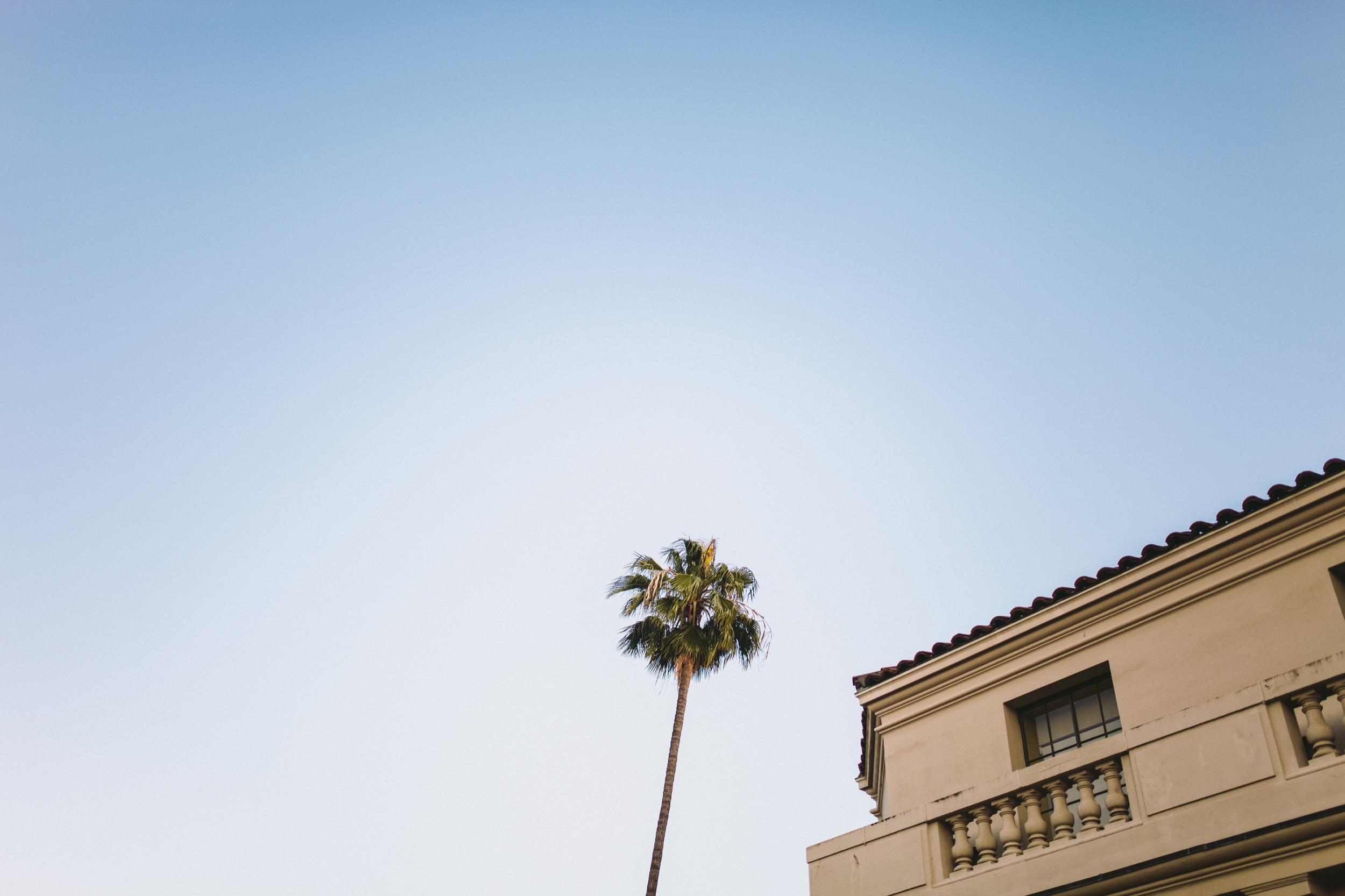 Pasadena City Hall Palm Tree.jpg