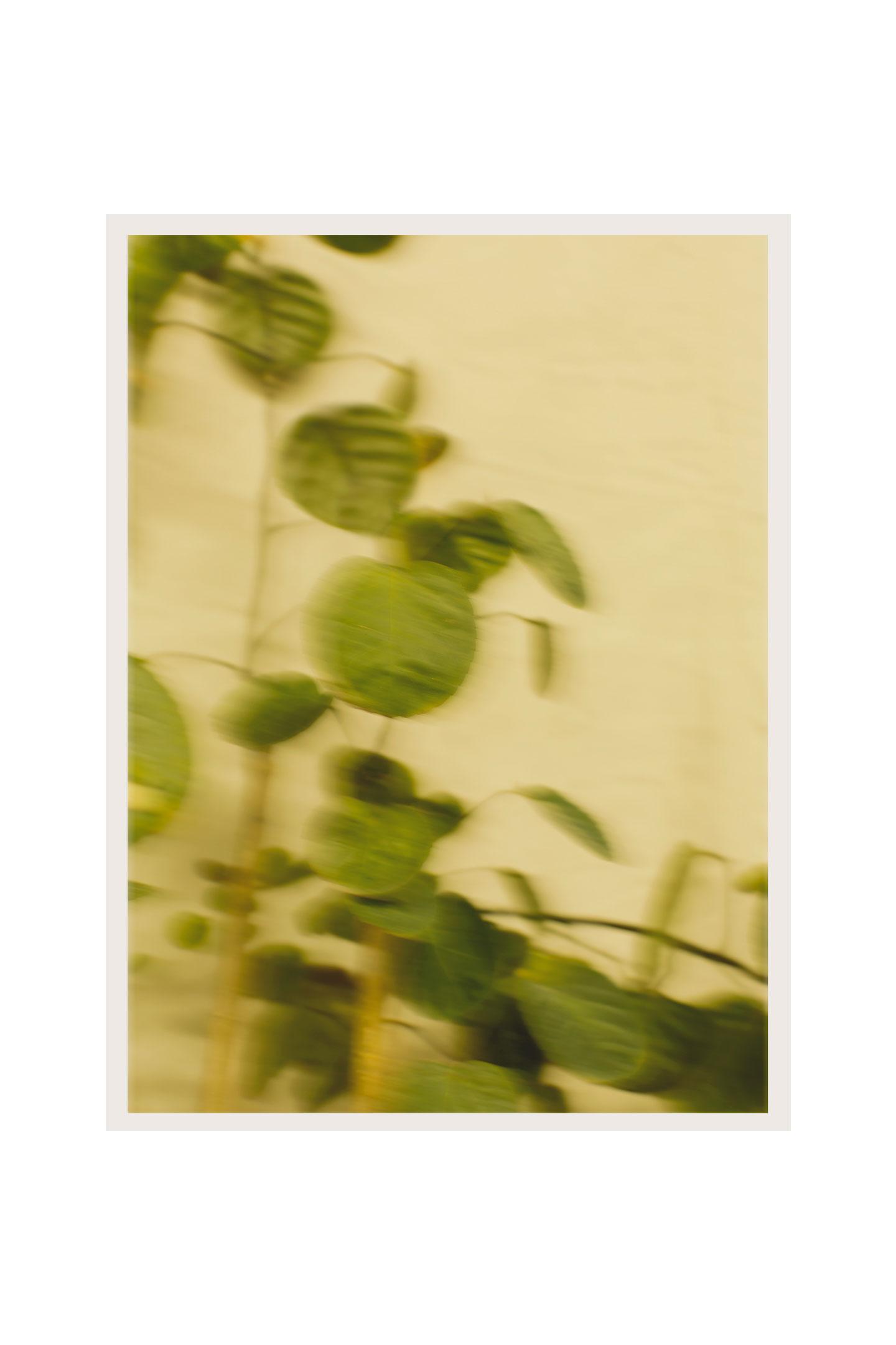 noua-unu-plant-still.jpg