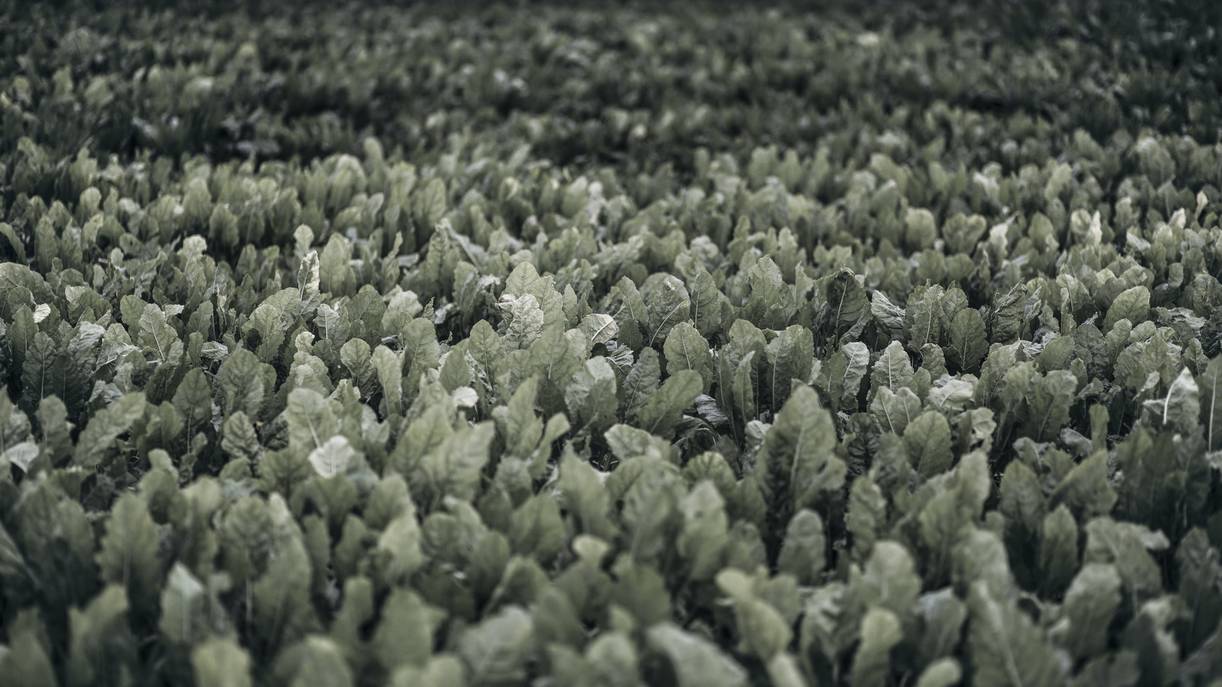 AgriculturalLandscape-3.jpg