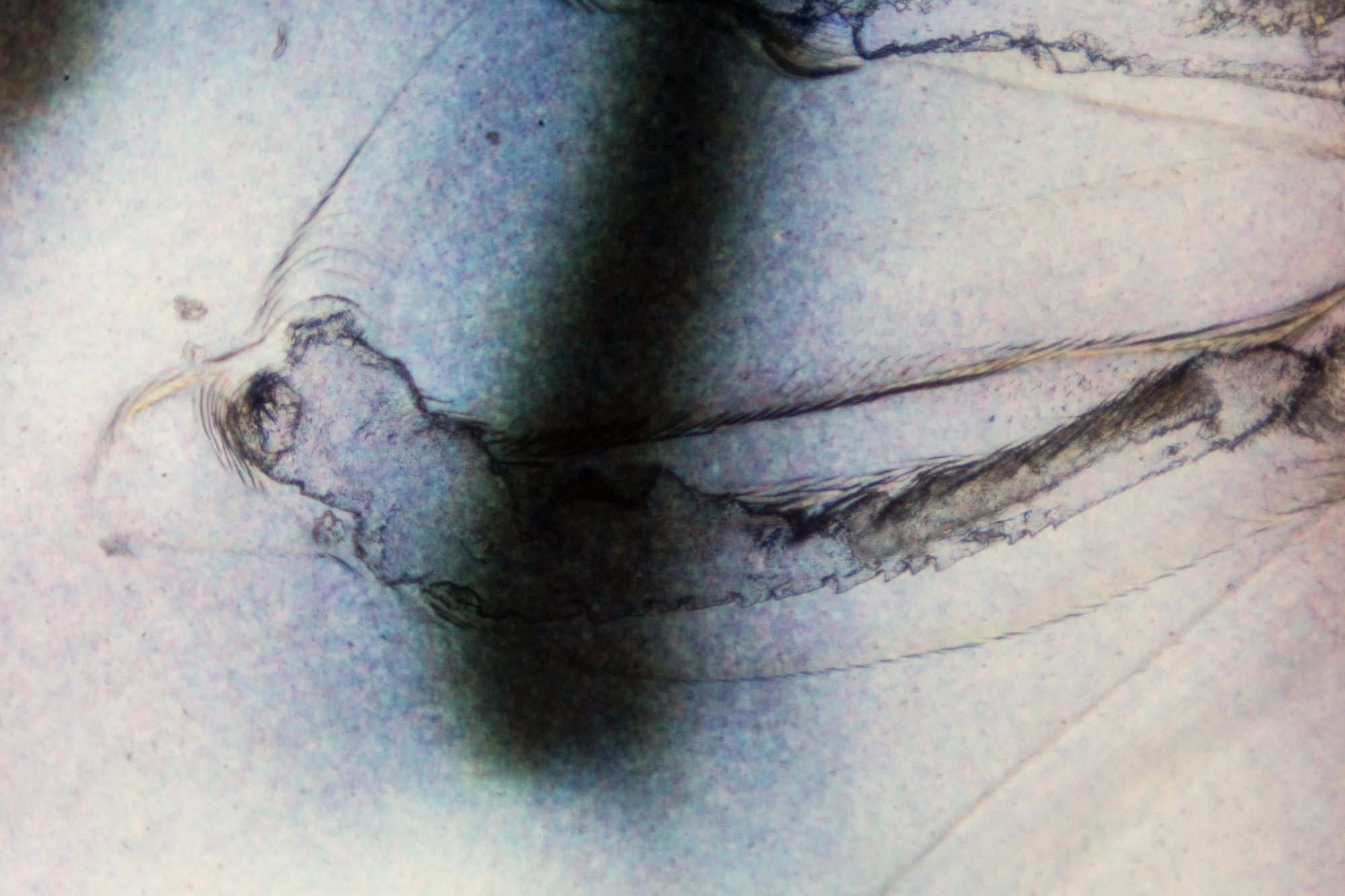 Microscop-negative (1 of 1)-4.jpg