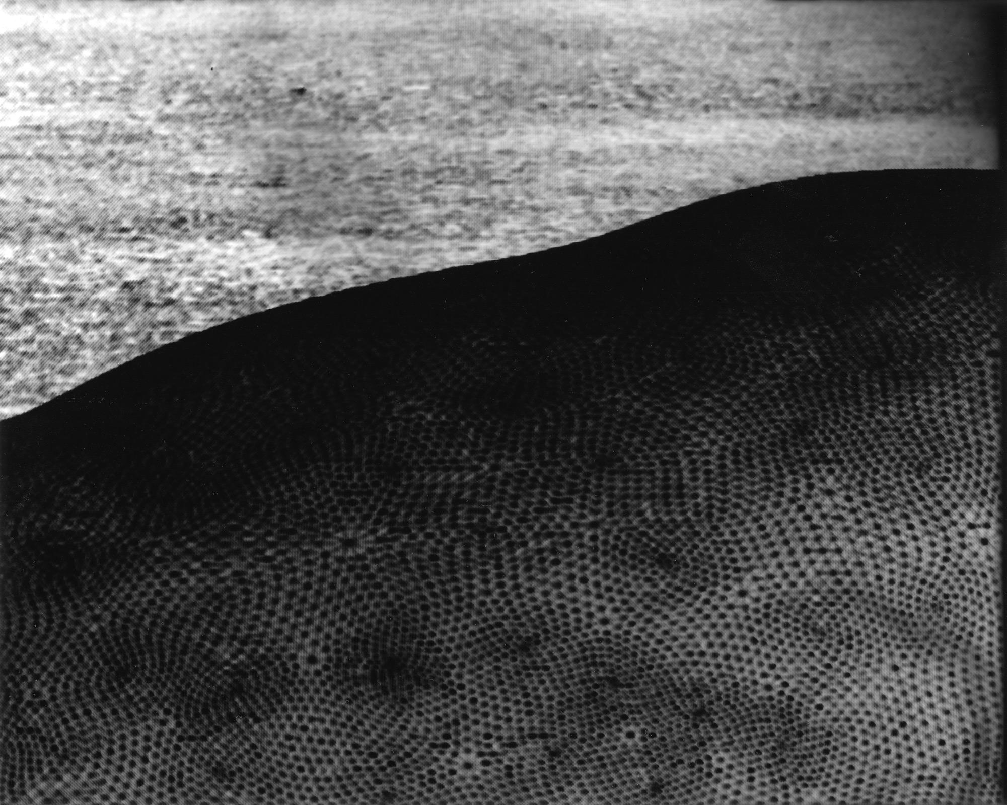 Luminogram. Digital image projected onto the photosensitive paper.
