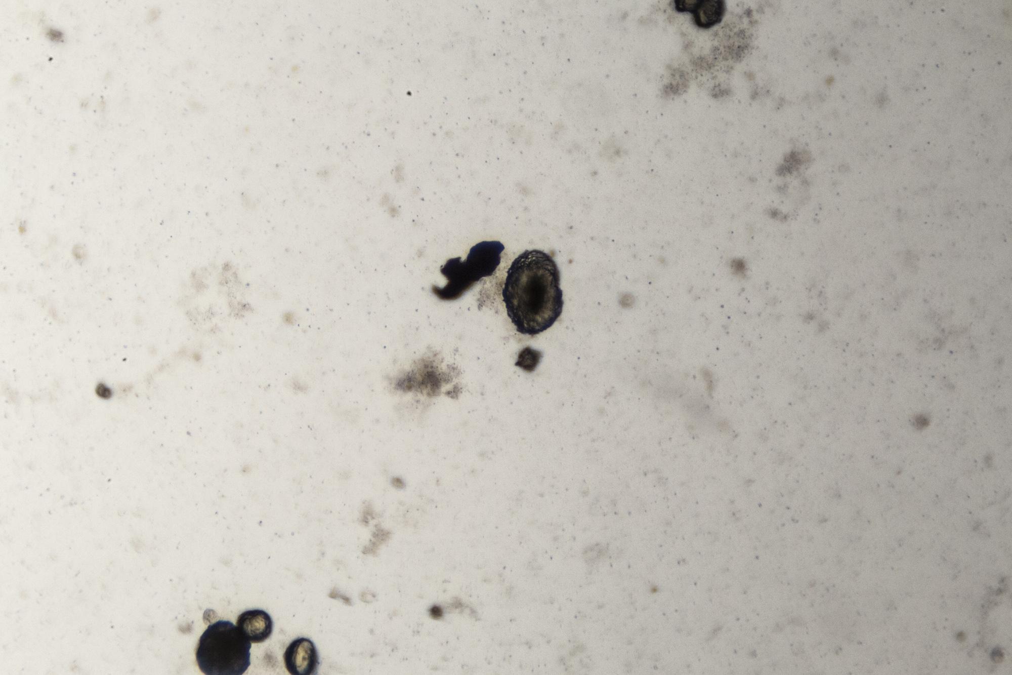 RRodner-Microscopic-6.jpg