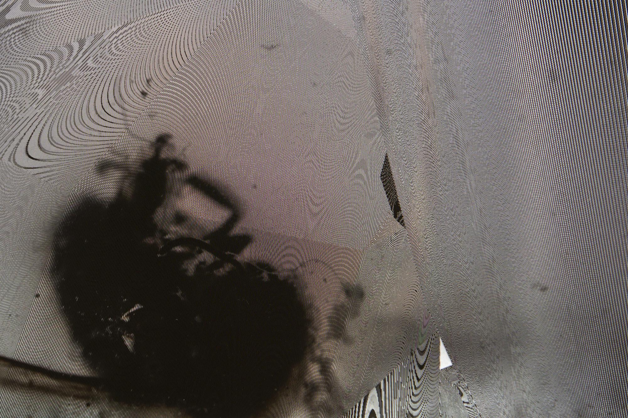 RRodner-Fly-11.jpg