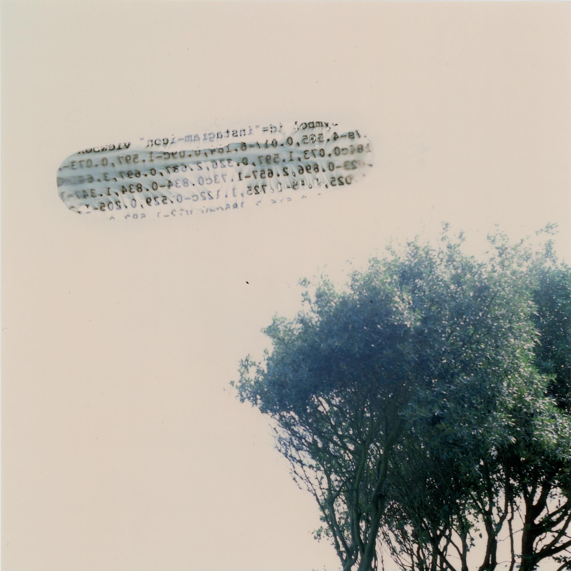 RRodner-Acetate-Tree.jpg
