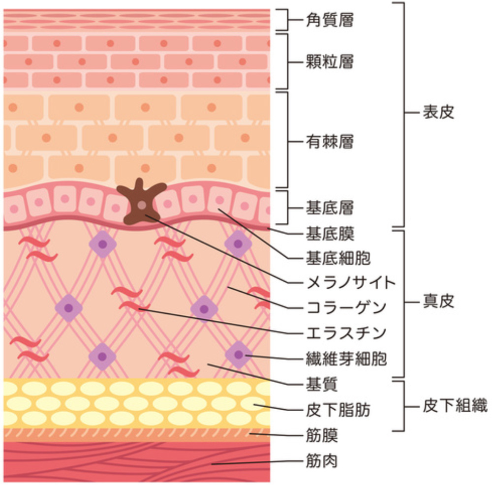 genryu_chart.jpg