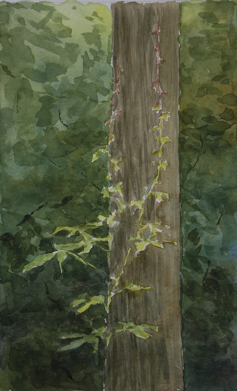 SOLD Virginia Creeper - Race to the Top
