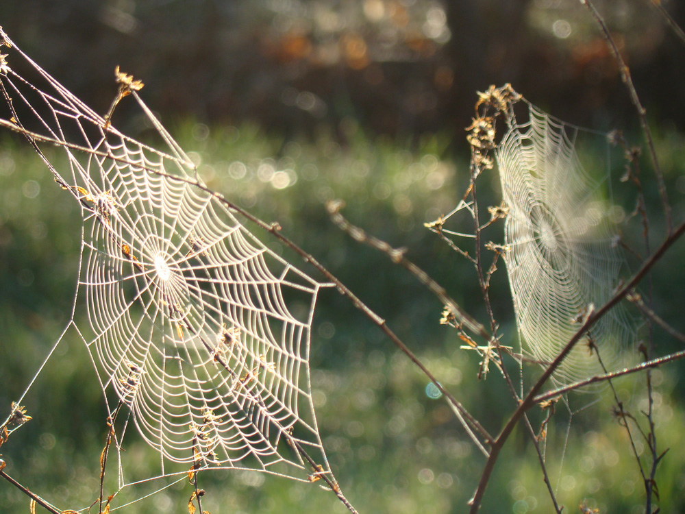 Dewy webs