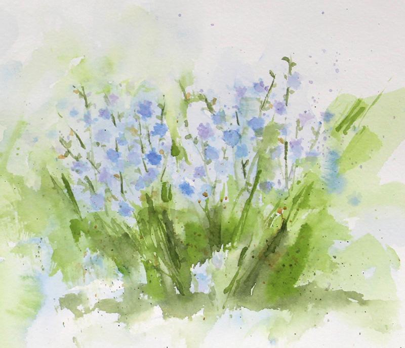 Chicory 2