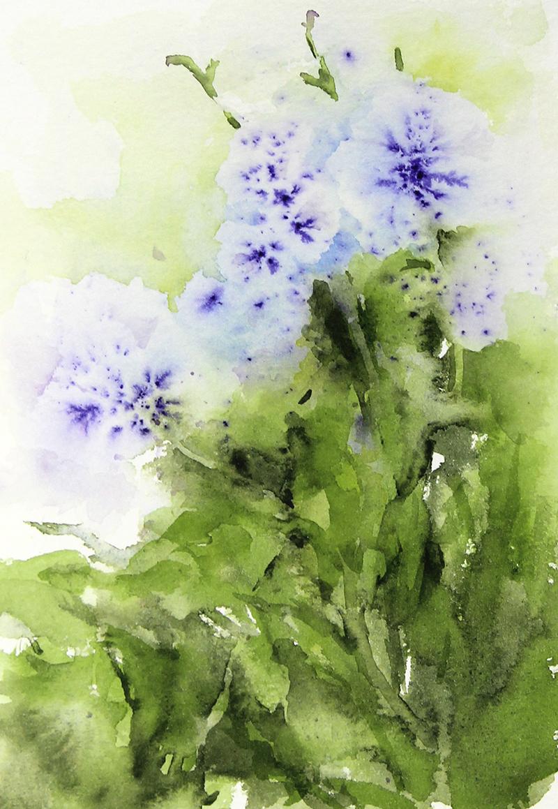 Chicory 4