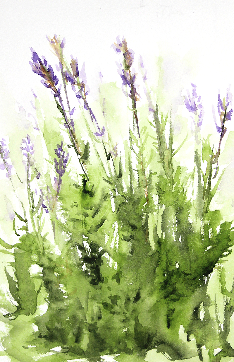 Lavender - 547