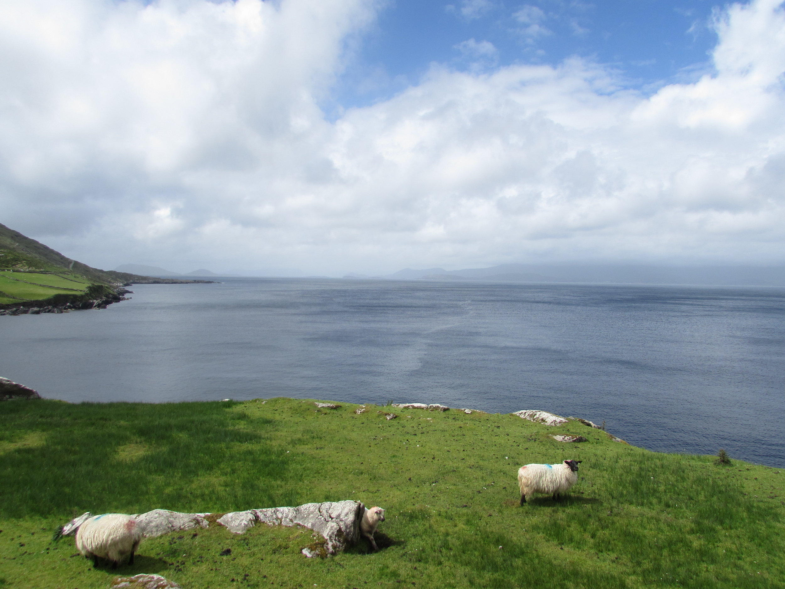 The traffic on Beara consists mainly of sheep.