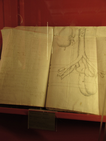 Camaldoli anatomy sketch.jpg