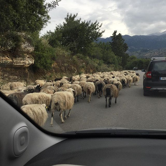 Traffic jam on my way to work.