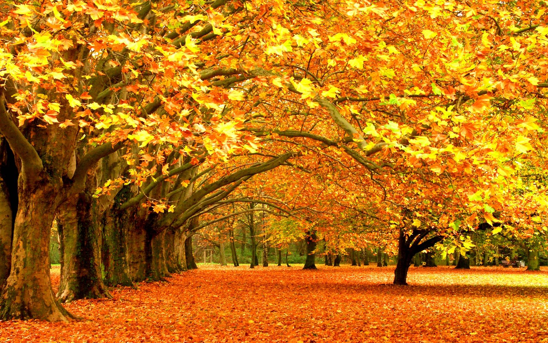 Fall-Season-HD-Landscape-Picture.jpg