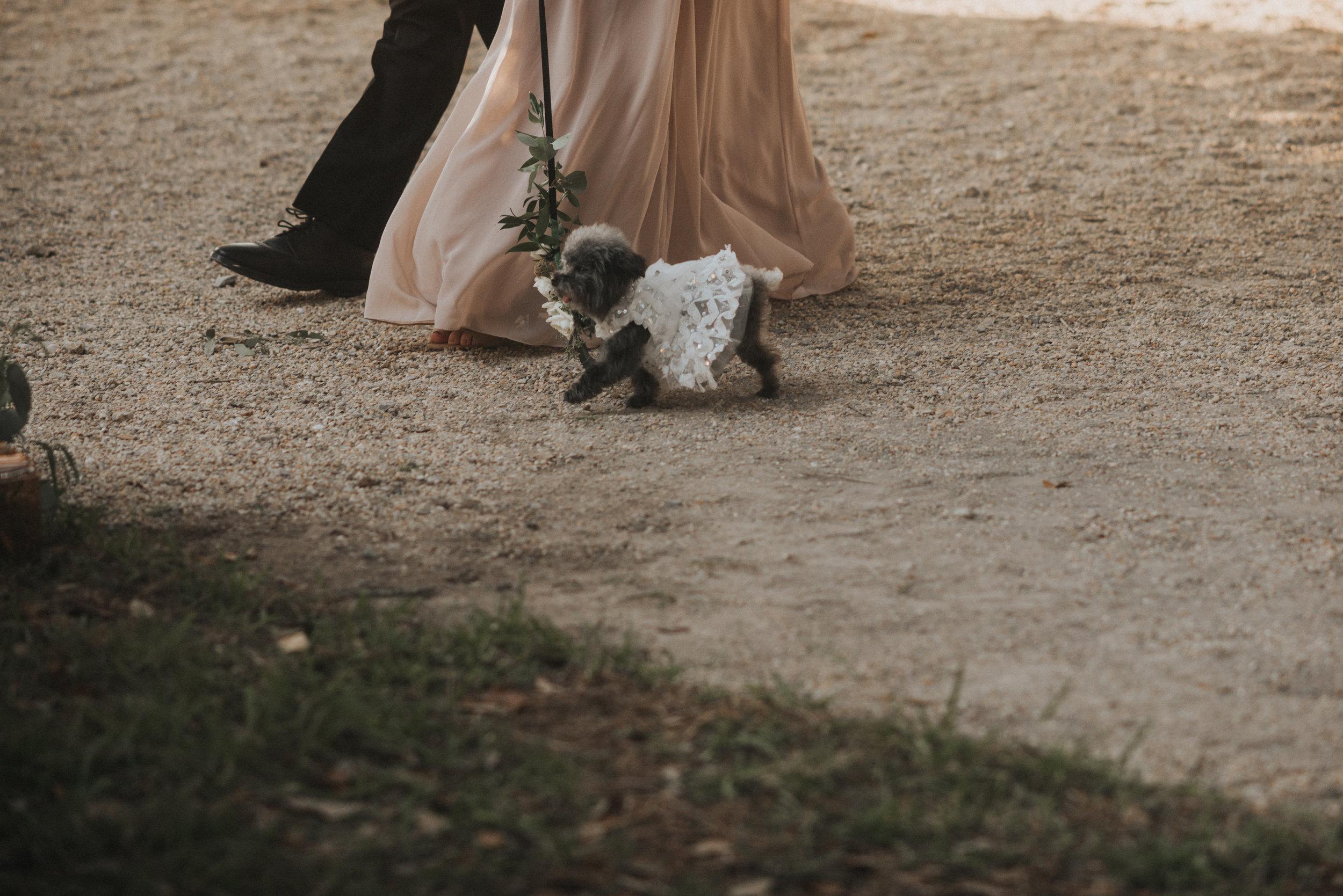 Southern Fete, Southern Wedding, Family Dog