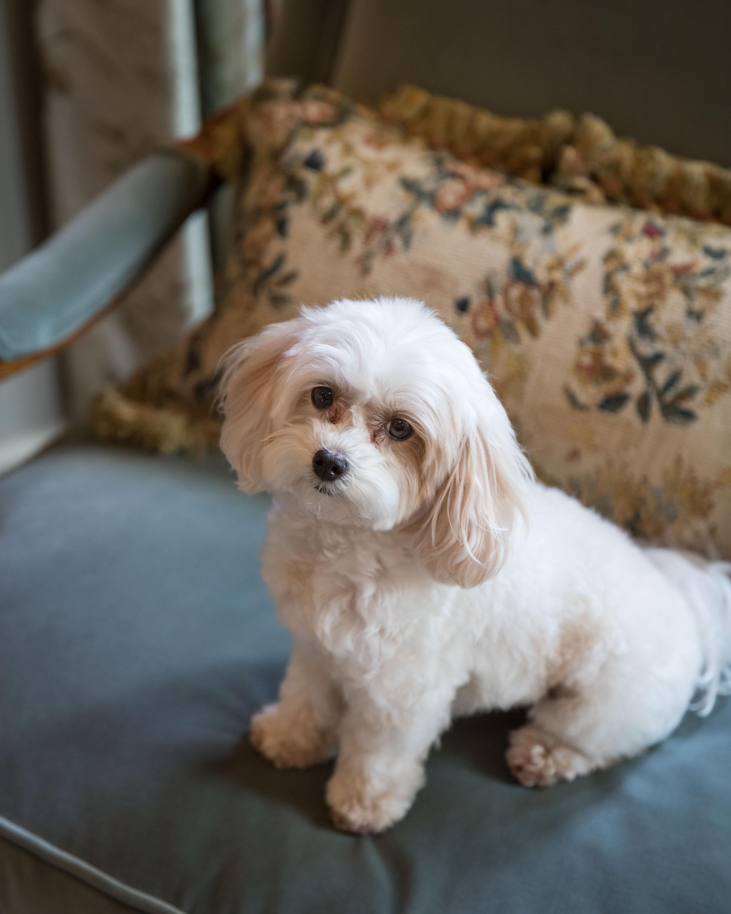 Southern Fete, Southern Wedding, Bride and Groom's Dog, Jay Faugot Photography