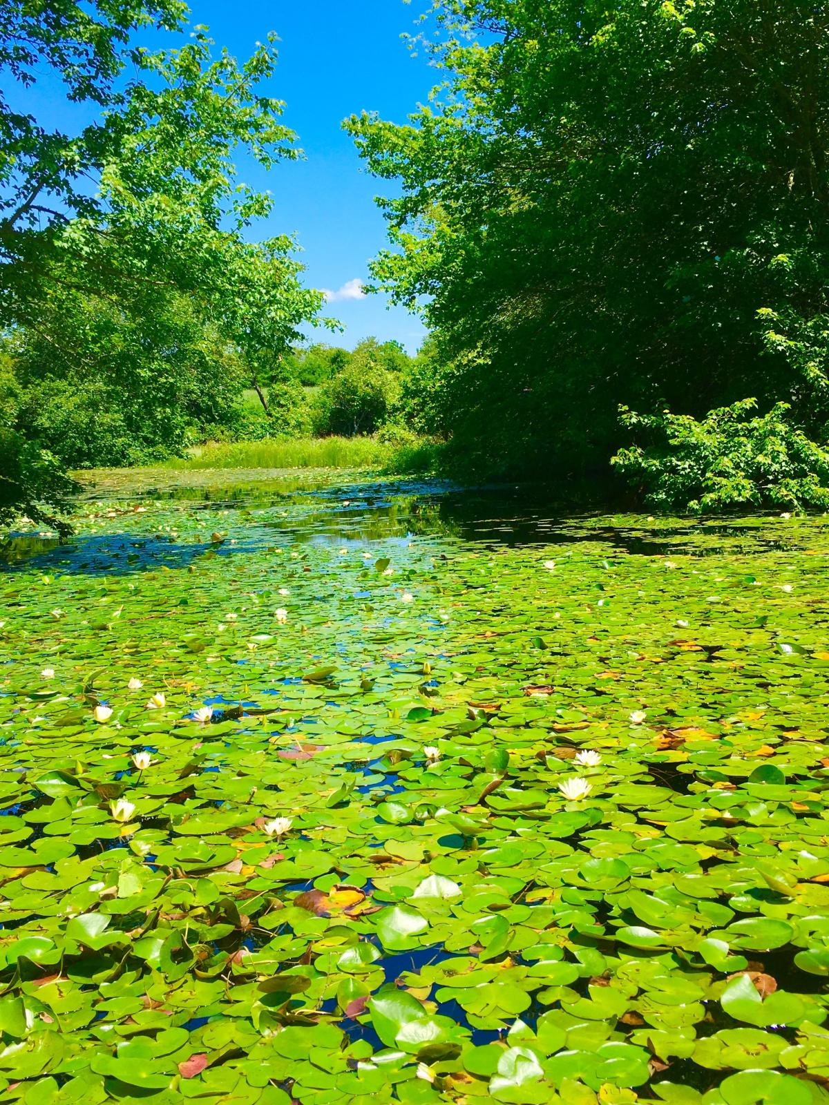 trustom pond.jpg
