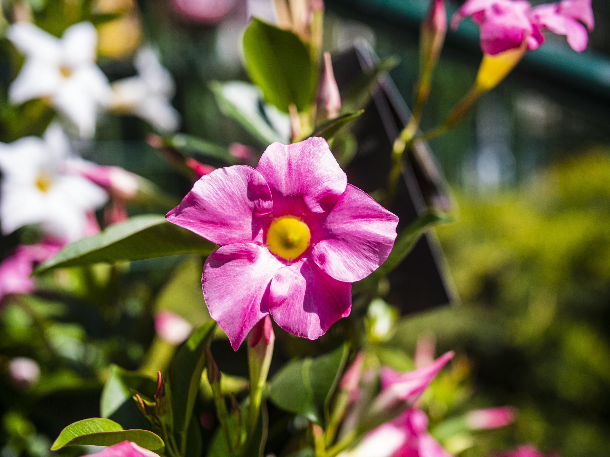 BLUMENABO  Wir liefern nach Vereinbarung regelmäßig frische Blumenfreuden direkt zu Ihnen ins Haus.