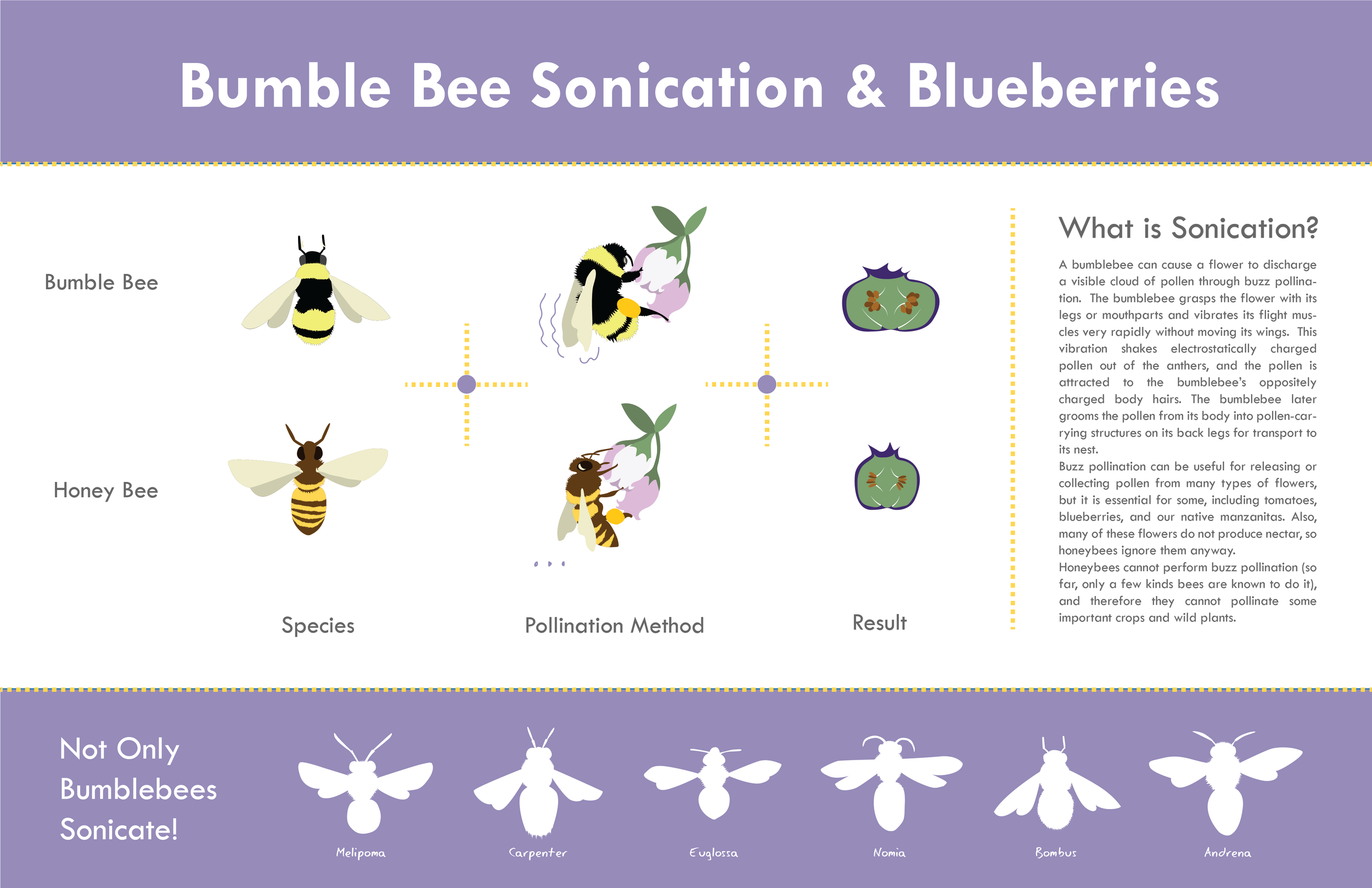 BeeInfographic-01.png