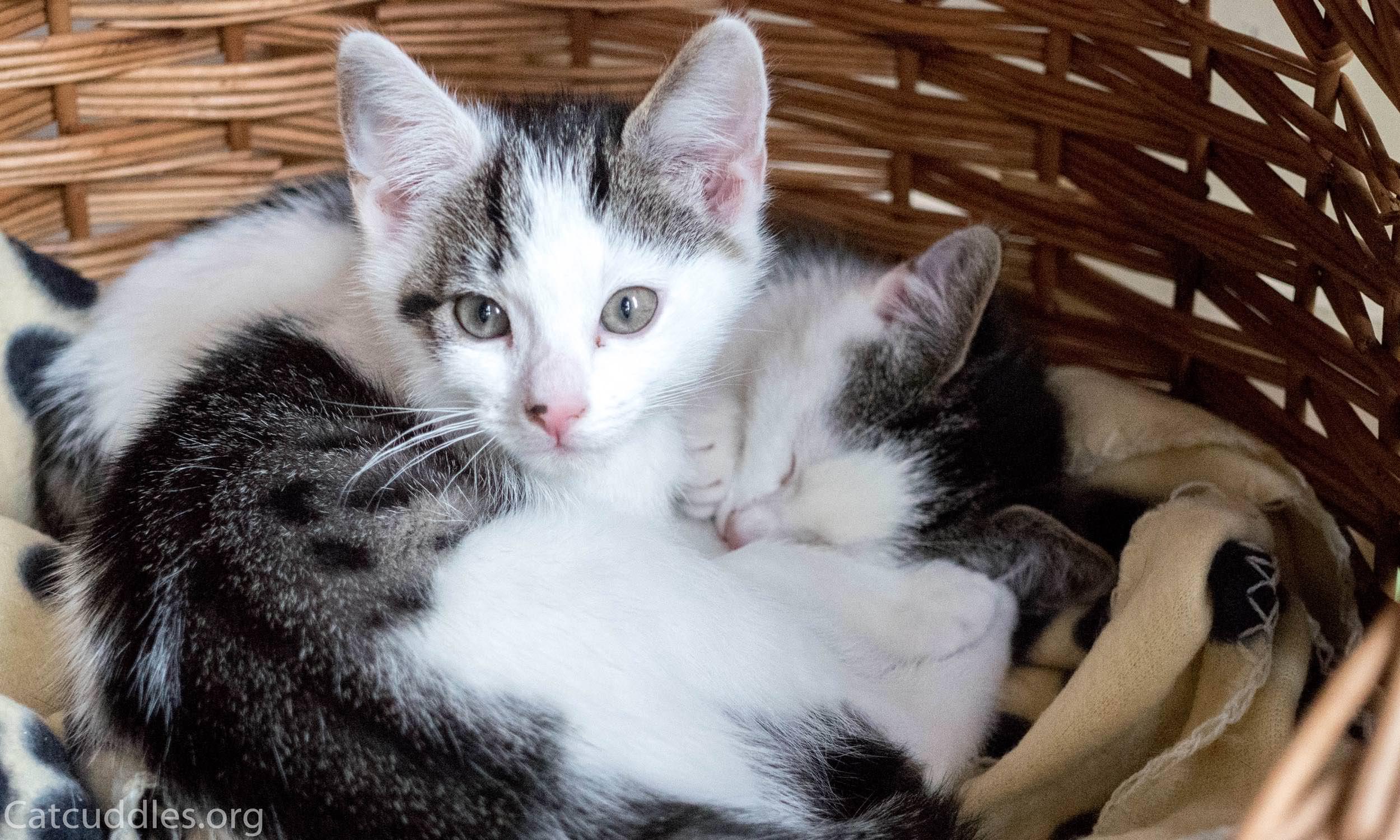 catcuddles-P1104687.jpg