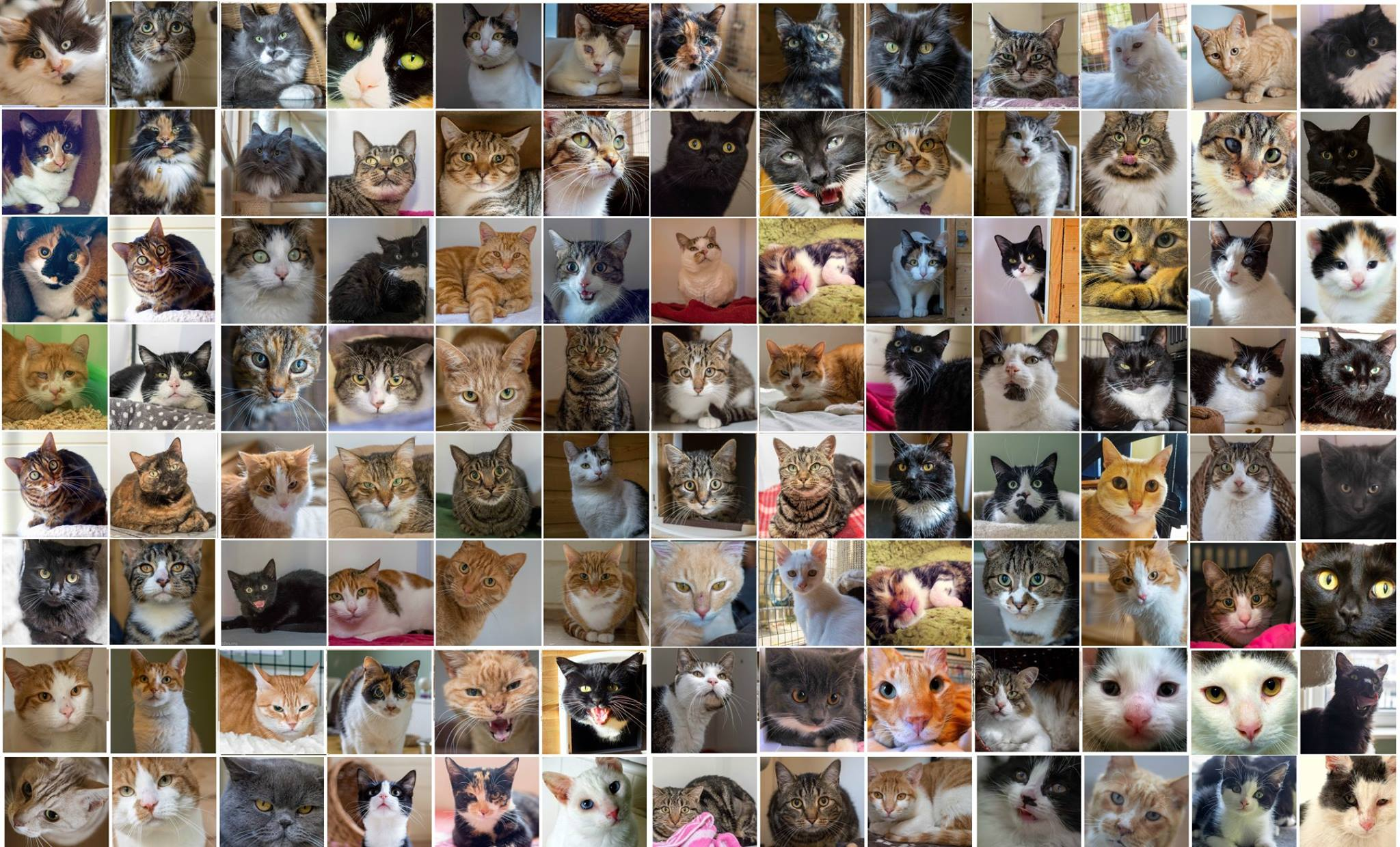 #Save Catcuddles SE2 - The faces that you see here represent only a fraction of the cats that The CatCuddles Sanctuary has helped over the years. Cats who have been neglected, unwanted, abandoned, and cats who have been cherished and loved until circumstances parted them from their owners.For over 7 years, our dedicated Volunteer Team have fought tooth and nail to save every kind of cat, with every kind of story.