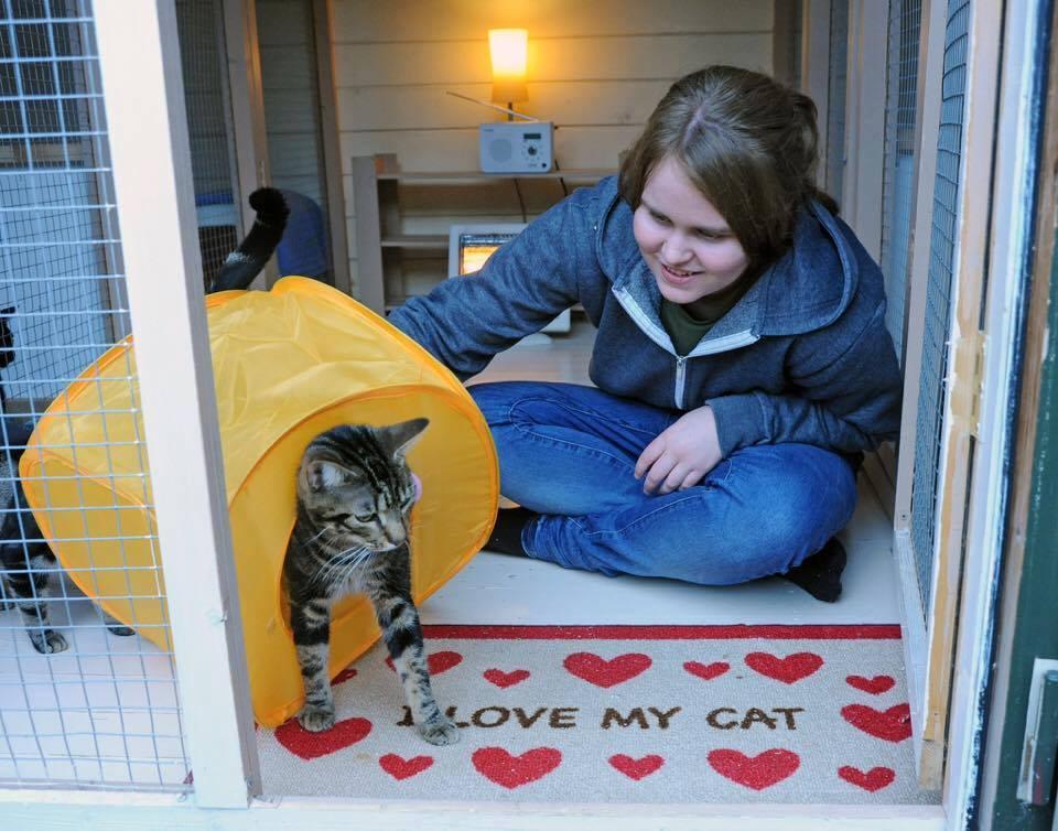 save-catcuddles-11.jpg