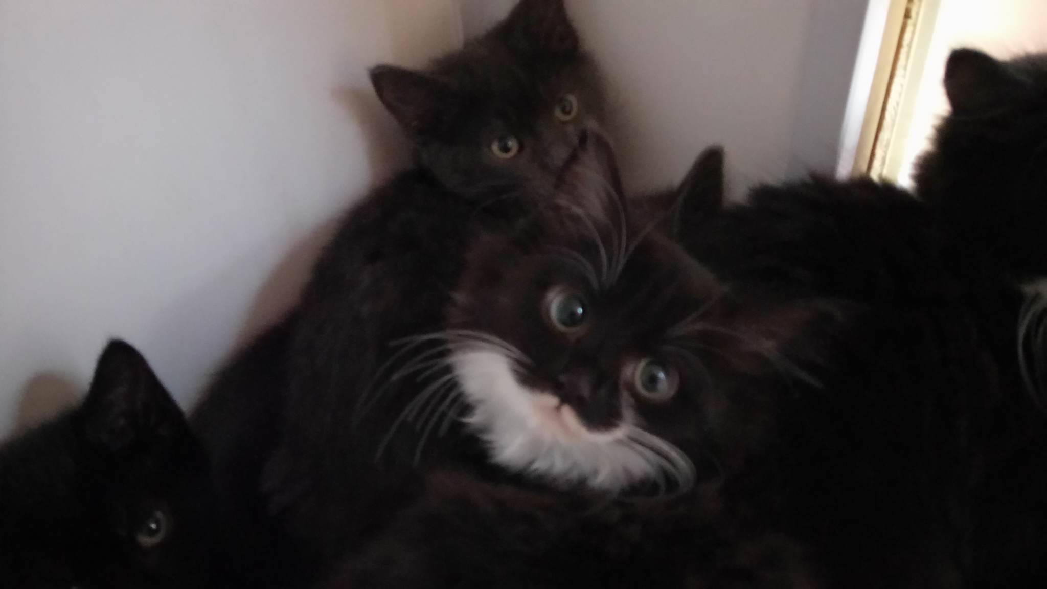 shooters-hill-kittens-family.jpg