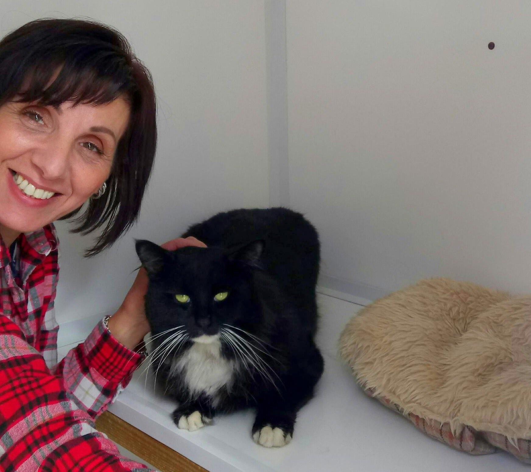 catcuddles-volunteer-black-cat.jpg
