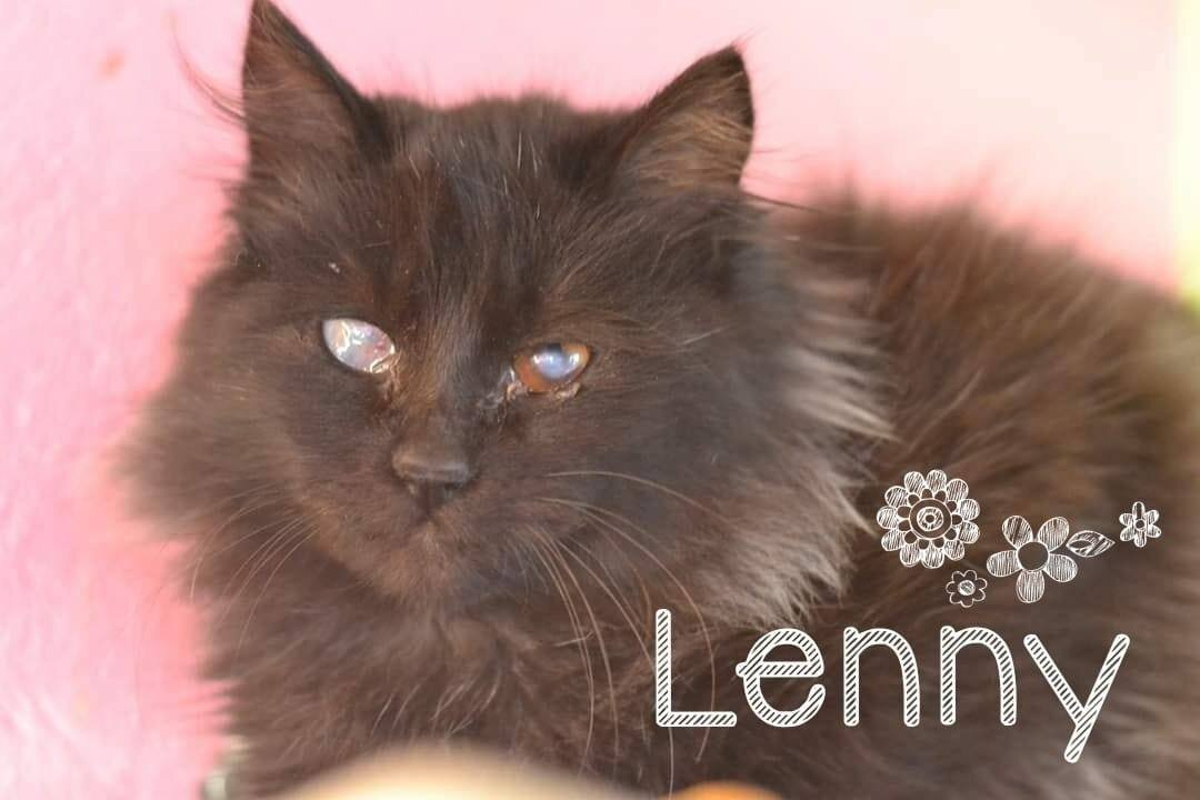 Lenny 2.jpg