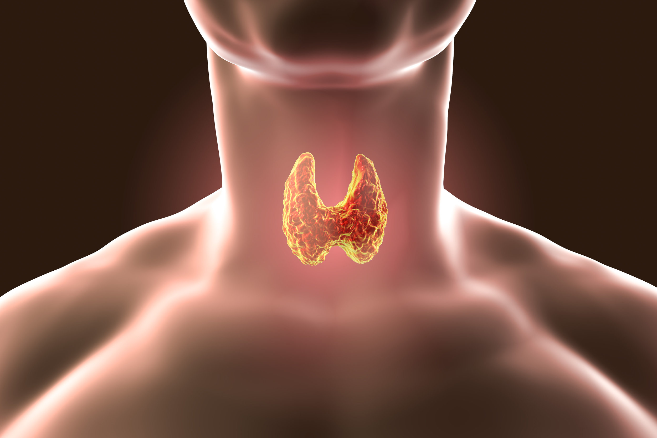 Thyroid image 2.jpg