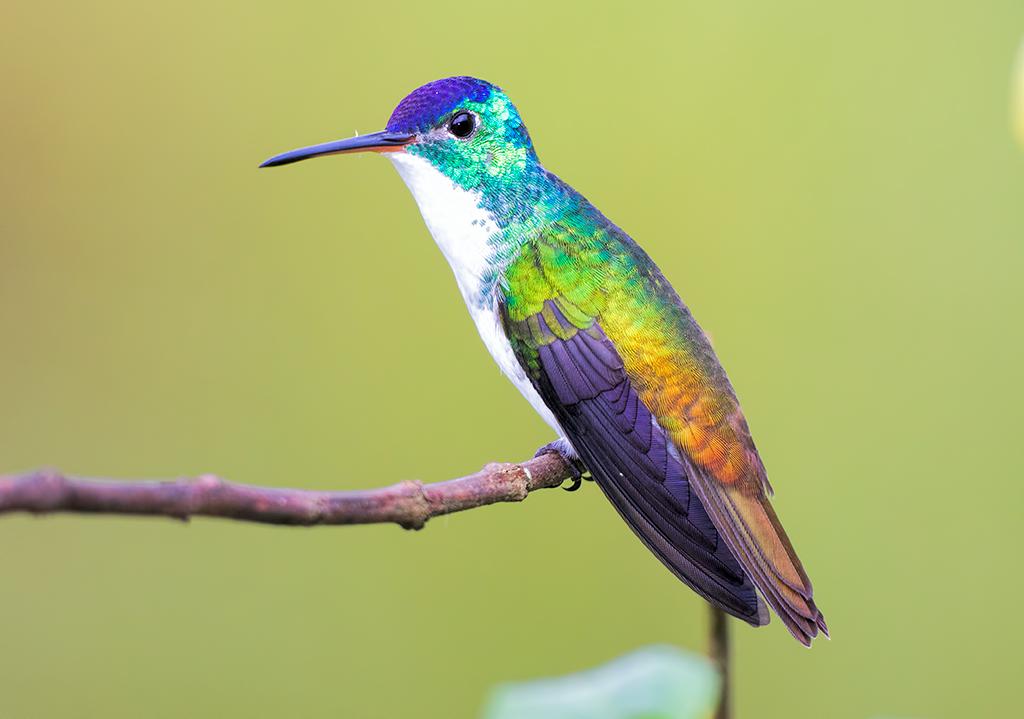 Andean-emerald-004.jpg
