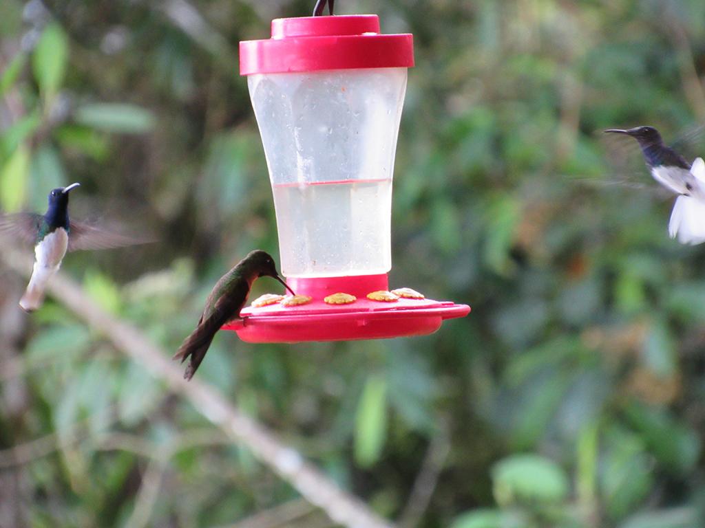 Hummingbird-feeders.jpg