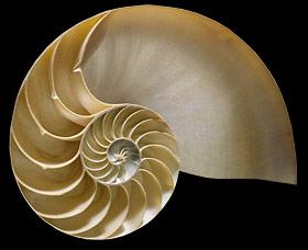chambered-nautilus-shell-se40.jpg