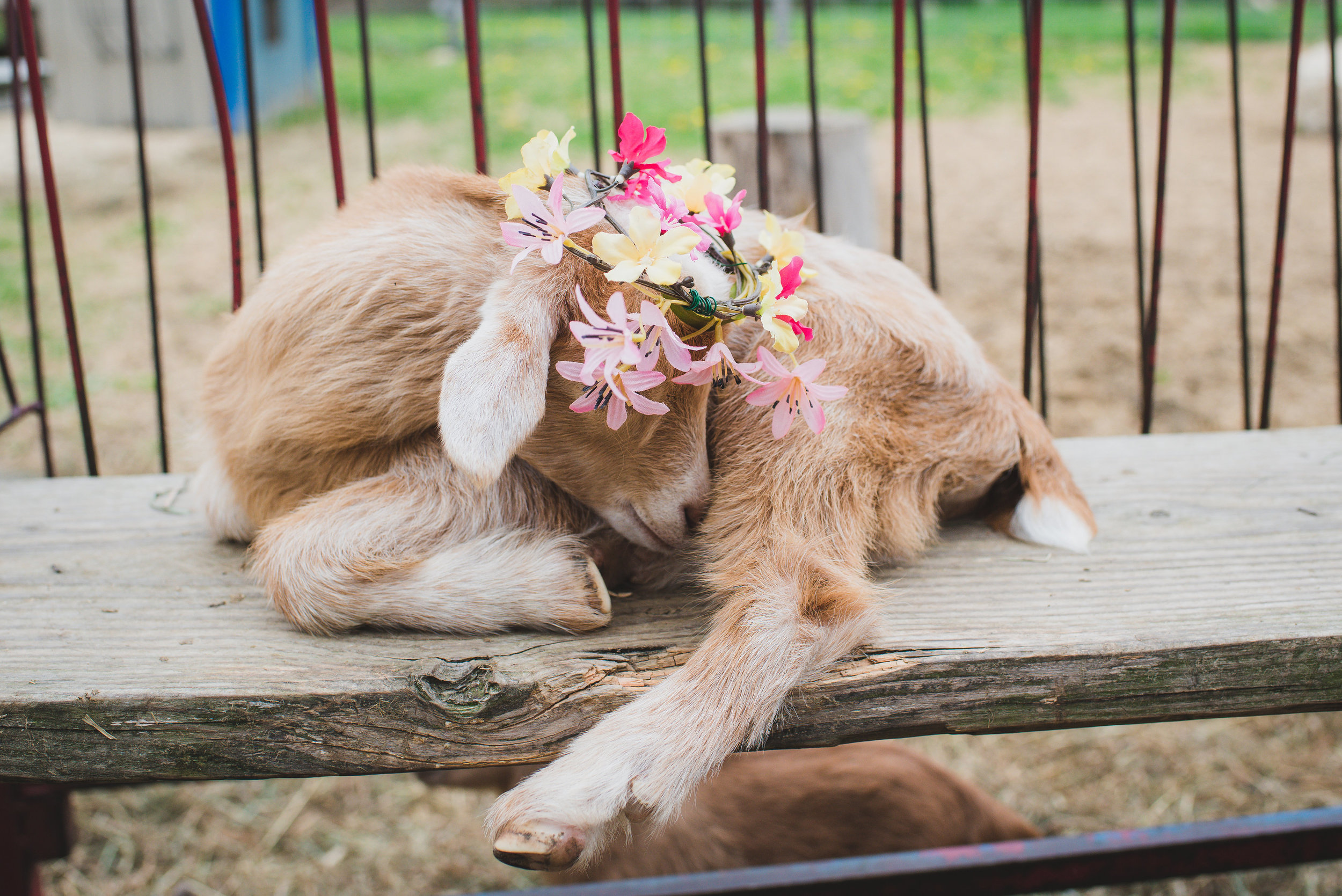 If you love these photos, please check out our LOVE PROJECT,  Flower Crowns and Tutus